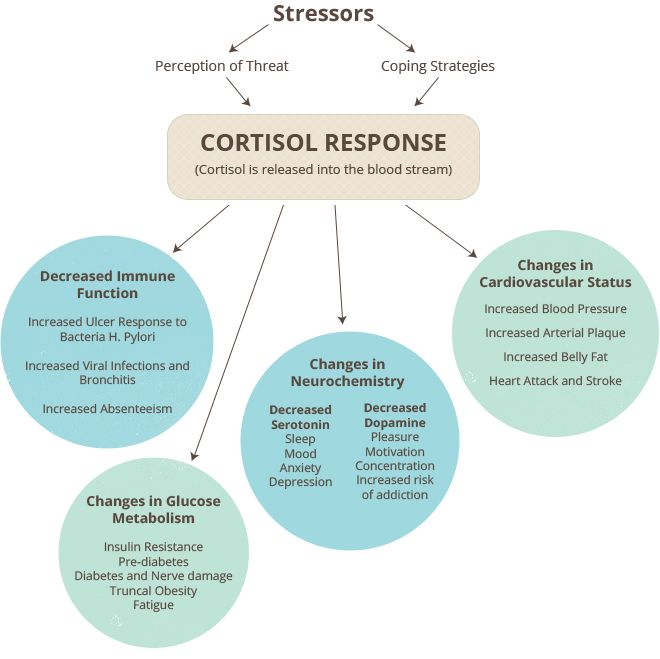 Cortisol Response ~ The synthesis of cortisol in the adrenal gland is stimulated by the anterior lobe of the pituitary gland with adrenocorticotropic hormone (ACTH); ACTH production is in turn stimulated by corticotropin-releasing hormone (CRH), which is released by the hypothalamus.