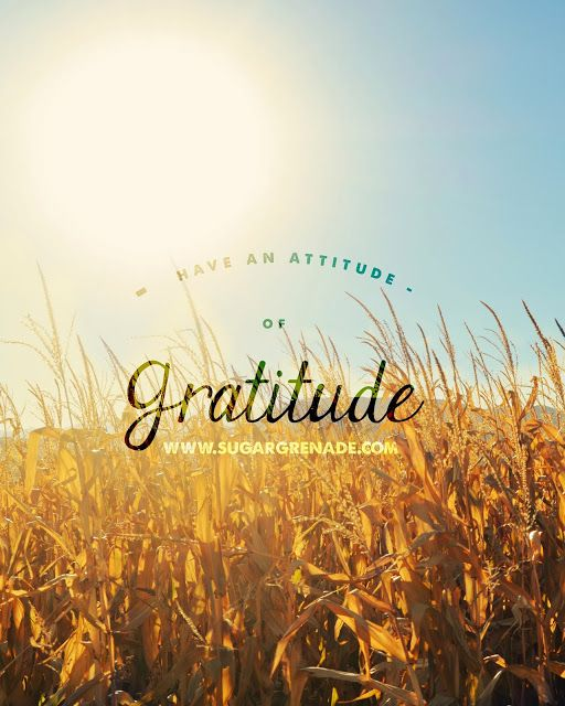 have an attitude of gratitude