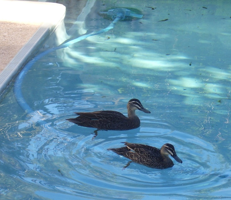 Interlopers in my pool