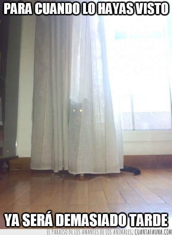 Los gatos son los animales más ninjas