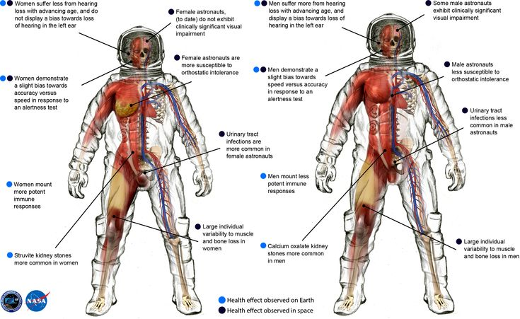 """The fascinating differences between men and women astronauts in space - NASA and the National Space Biomedical Research Institute have published a new research paper detailing how space flight affects """"cardiovascular, immunological, sensorimotor, musculoskeletal, reproductive and behavioral implications"""" on men and women."""