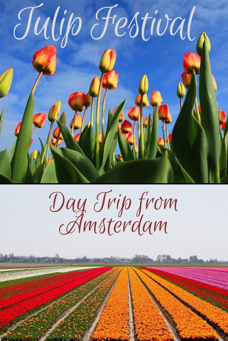 49198c26957a2b2f93da569813625e47 - Keukenhof Gardens Transportation And Skip The Line Ticket From Amsterdam