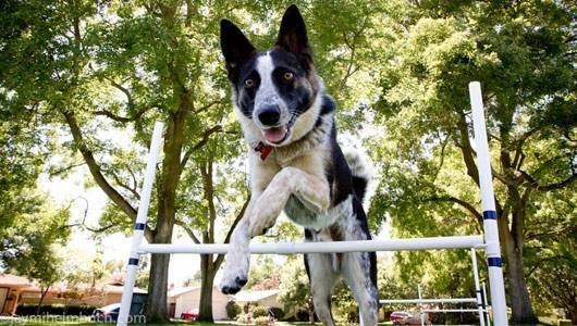 Here's what you should look for when geting started on this fun sport with your favorite pooch.