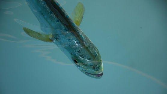 The three-million-barrel 2010 Deepwater Horizon oil spill contaminated the…