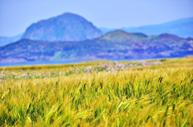 가파도 청보리^^ 5월은 보리가 익는 계절.. 청보리밭 너머로 보이는 아름다운 제주풍경입니다. 당일치기로 다녀오기에는 너무 아쉬웠습니다. #페이스북 송승헌님