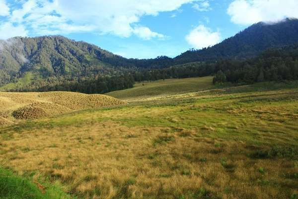 Savana Oro-oro Ombo at Mount Semeru, East Java, Indonesia