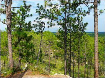 Национальный лес Кисатчи в Луизиане