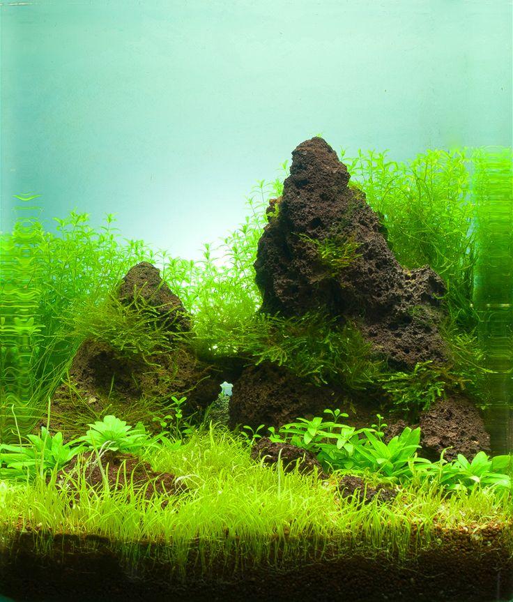 Aquarium Aquascape: 441 Best Nano Aquas Images On Pinterest