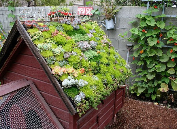 Book on urban vertical gardening. Found objects make fantastic planters. Of course, no gardening book is complete without a chicken coop.  Green roofed chicken coop. Would be great on a shed too.