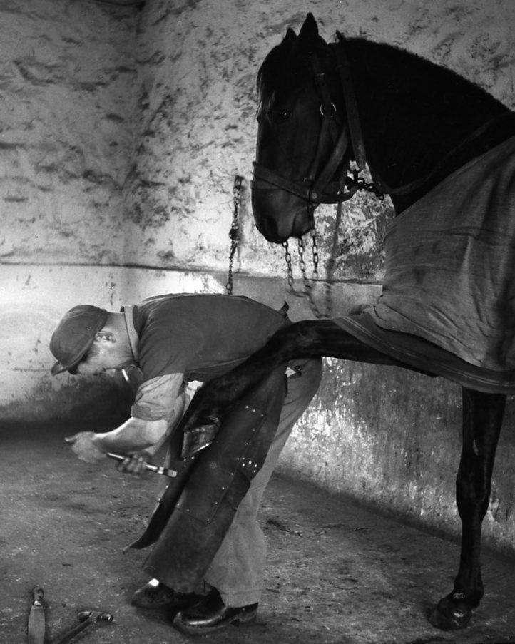 Horse Pedicure! Robert Doisneau // Horses - Maurice Bertin maréchal-ferrant chez Chyriakos 1954 #BlackAndWhite #AndyMoine