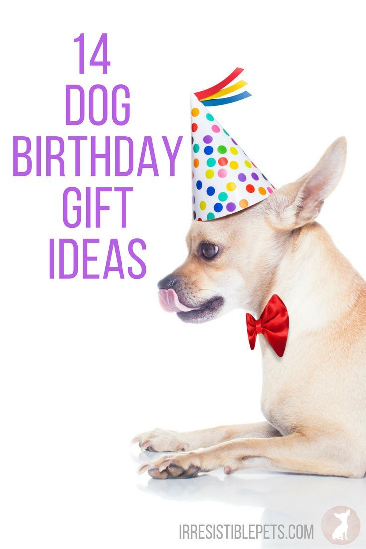 What Do I Buy My Dog For Its Birthday Weve Rounded Up Of Gift Ideas To Help You Out In Addition A Cake Need Some Fun