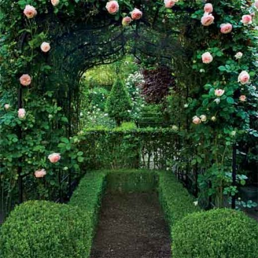 Pierre de Ronsard (Eden) climbing rose planted with precisely cut boxwood hedges