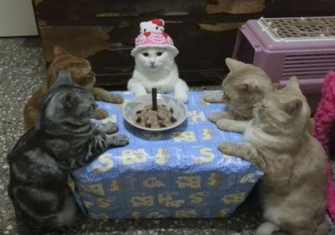 ケーキと見立てたご飯らしきものを5匹の猫ちゃんたちが囲み、まったく盛り上がり...