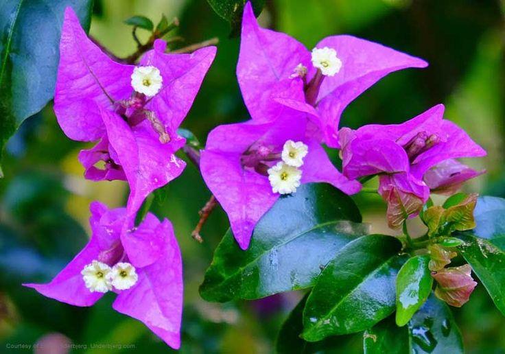 See a variety of beautiful flowers. #nature #plantation #flowers #jungle #beautiful #amazing #beauty #summer #spring #paradise #bali #island #islandofgod #travel #holiday #vacation #explorebali #hotel #resort #luxury