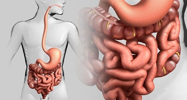 For the treatment of many diseases, it is enough to clean the intestines of mucus, fecal deposits and other parasites.In a lifetime of 70 years, through our intestines pass about 100 tons of food and …