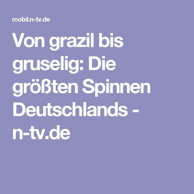 Von grazil bis gruselig: Die größten Spinnen Deutschlands - n-tv.de