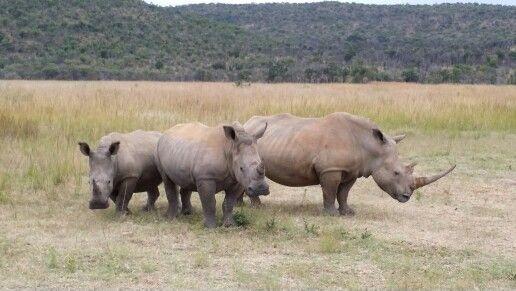 Rhino's, South Africa