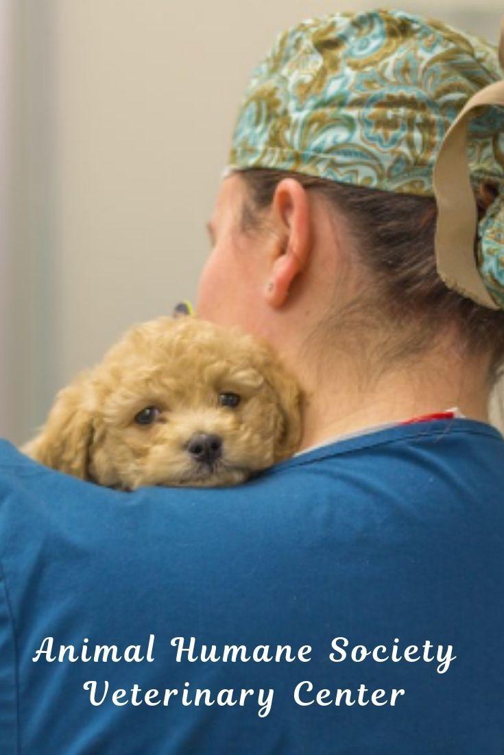 Animal Humane Society Veterinary Center Humane Society Animals Dog Grooming