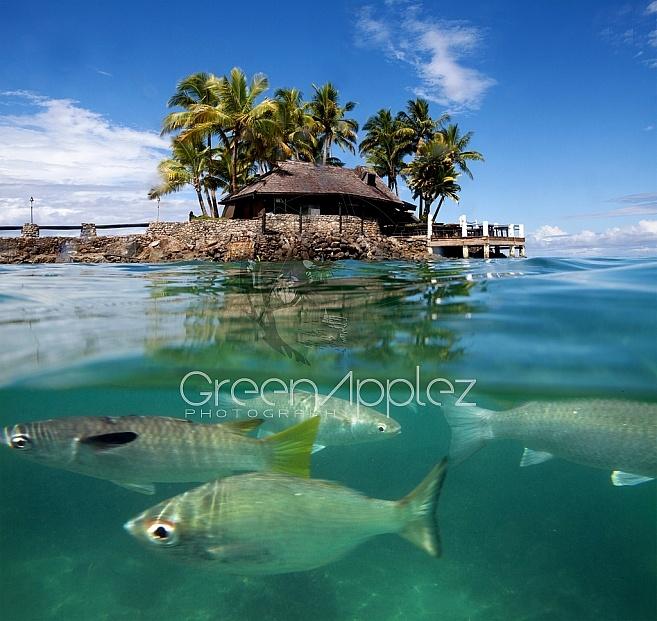 Island Paradiise - Coral Coast Fiji - F41