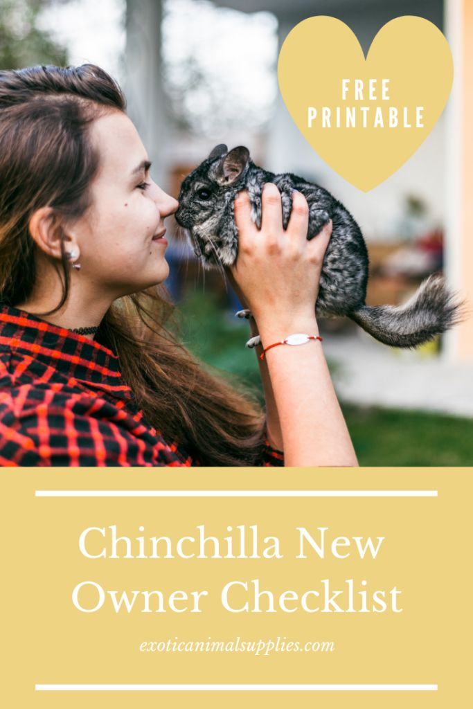 All the pieces You Want for a Pet Chinchilla – New Proprietor Guidelines