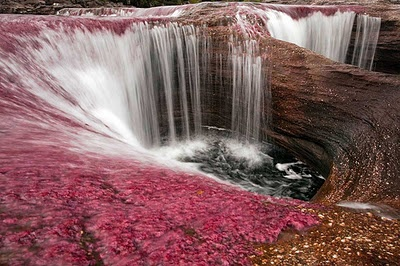 Caño Cristales - Colombia. The most beautiful river in the world.