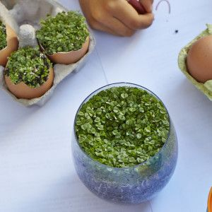 I Quit Sugar - Why you need to sprout chia seeds, and how to do it