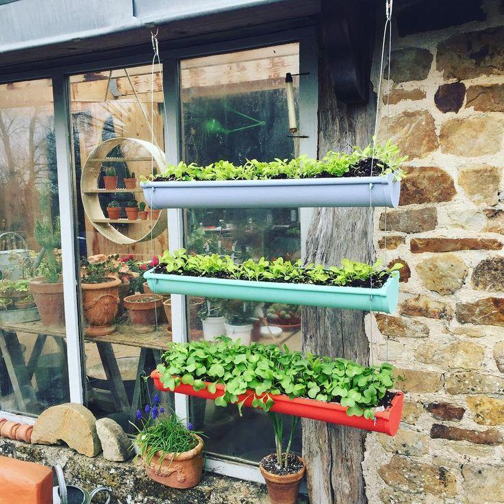25 best ideas about goutti re sur pinterest plantation de fraise fraise culture et jardinerie. Black Bedroom Furniture Sets. Home Design Ideas
