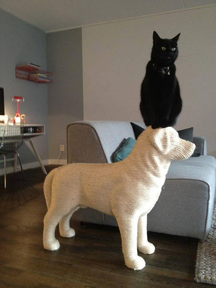 爪とぎを犬型にすると猫は大はしゃぎする | netgeek