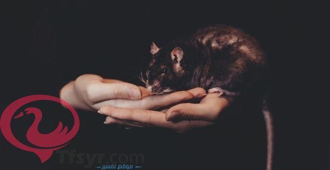 تفسير رؤية الفأر في المنام للعزباء والمتزوجه والحامل Animals Cats
