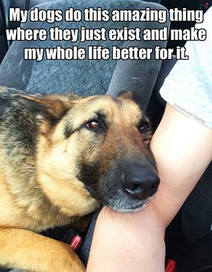 Something only a dog person would understand...