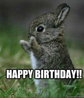 491f5540f3d77485a834bcbfe1087e3a birthday msgs happy birthday meme best 25 cute birthday meme ideas on pinterest happy birthday,Birthday Meme Animal