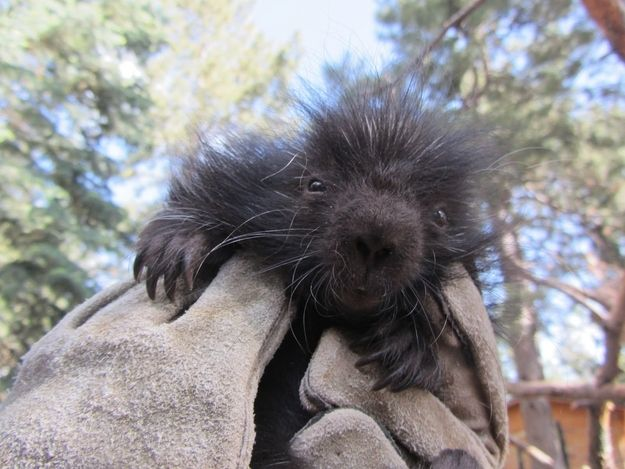 Porcupette. | Community Post: The Definitive Ranking Of Baby Animal Names, By Cuteness