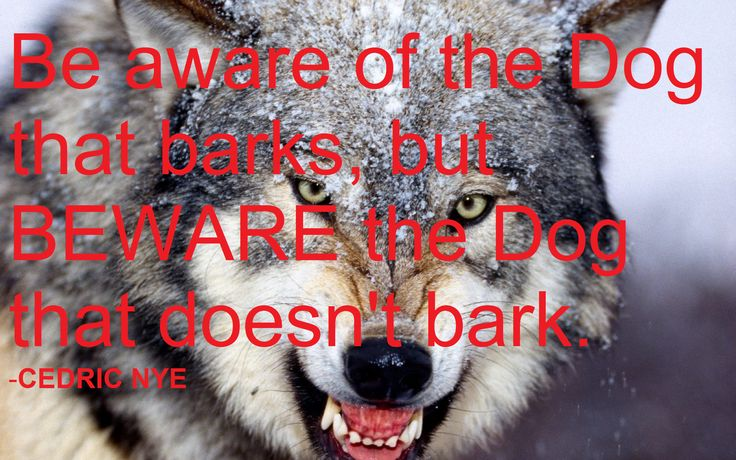 Beware Of The Dog That Doesn T Bark