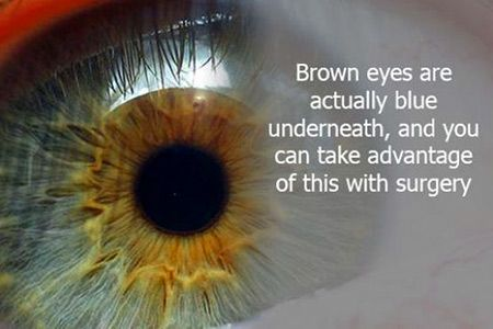 Best 25+ Brown eyes facts ideas on Pinterest   Interesting ... - photo#15