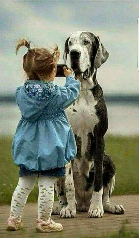 1418 best Dogs-Universal Repositories of Unconditional Love images ...
