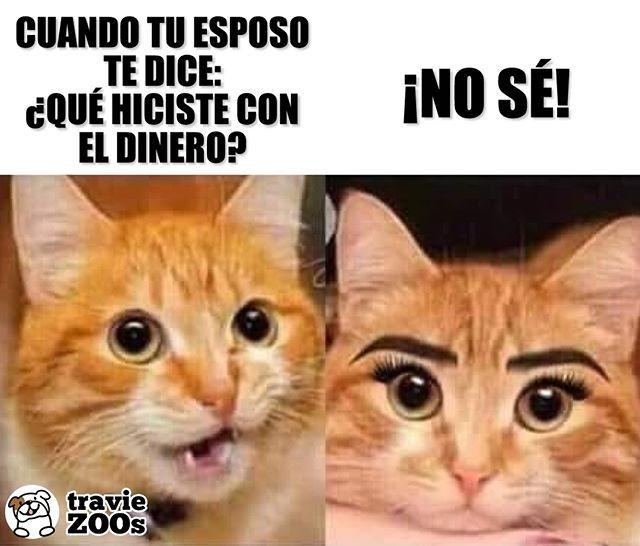 Ponerme Mas Bella Para Ti Mi Amor Cat Gato Belleza Funny Pestanas Makeup Memes De Maquillaje Meme Gracioso Memes De Animales Divertidos
