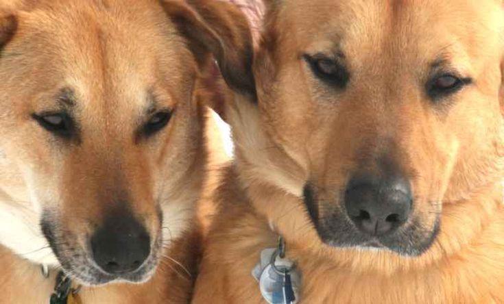 Best 25 Small Medium Dog Breeds Ideas On Pinterest -3821