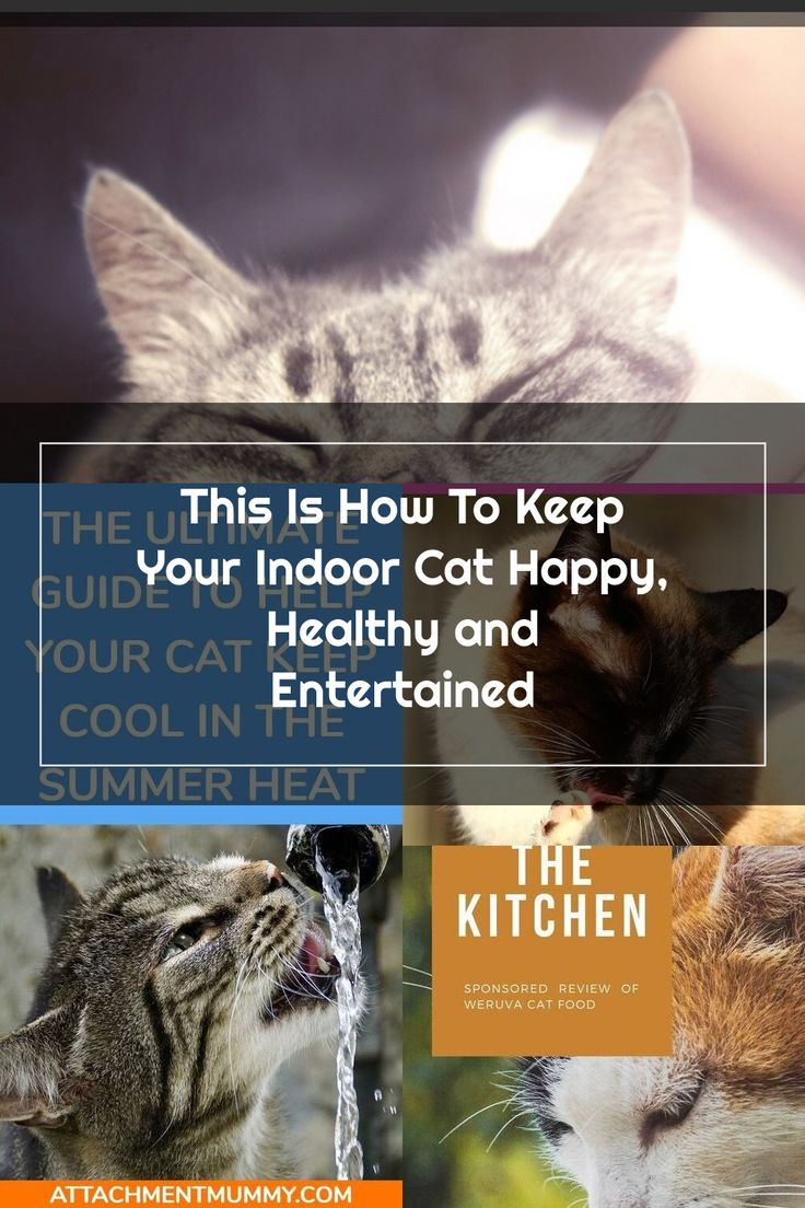 This Is How To Keep Your Indoor Cat Happy Healthy And Entertained