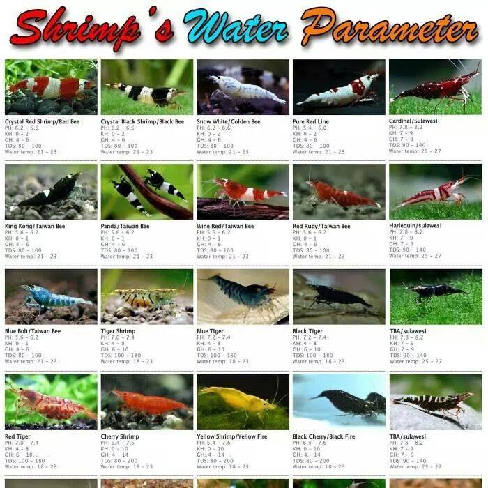 Shrimp Water Parameter
