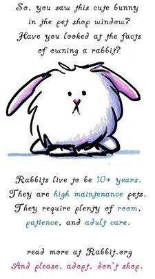 1000+ images about Rabbit info on Pinterest   A bunny, Rabbit ...