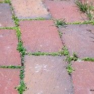 baking soda to kill weeds! website says you sprinkle it in the places you don't want the weeds to grow (sidewalk cracks, edges of flower beds) and though it might take a minute, it will be a safe, effective weed killer.