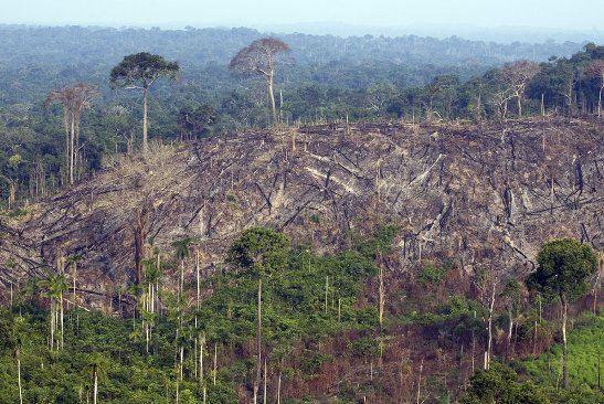 La cifra de deforestación en Colombia 2015 reporta 124.035 hectáreas afectadas