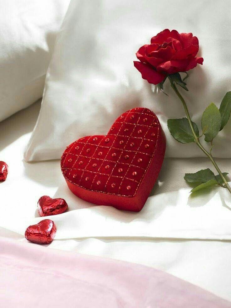 Gute Nacht, Guten Morgen, Valentinstag, Bilder, Sei Mein Valentinsschatz,  Valentinstag Nachricht, Valentin Tag Karten, Ideen Für Den Valentinstag, ...
