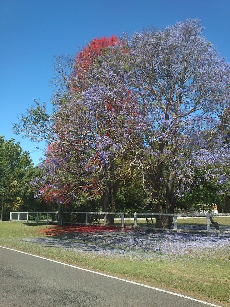 Summer at home, Manutuke, Gisborne, NZ