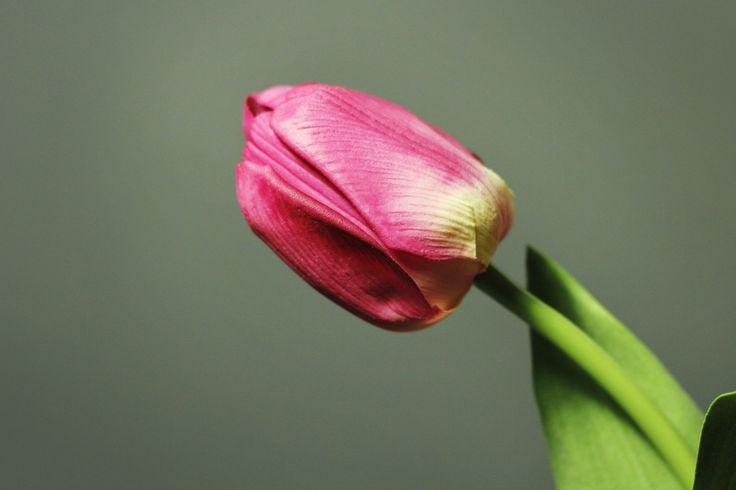 Roze Tulp http://kunstbloemenennaaldhakken.nl/product/roze-tulp-natural-touch/
