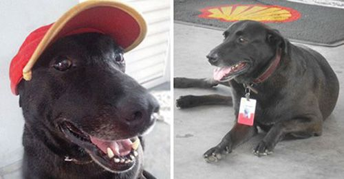 Dog Abandoned At Gas Station Now Works There As An Adorable Greeter