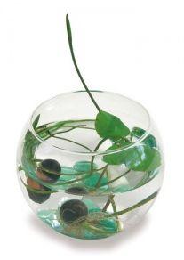 Fiore di loto  Cosa c'è di più magico veder crescere una pianta. In questa confezione, con bicchiere di vetro a forma sferica, si può mettere l'acqua e far nascere un fiore di loto. Un regalo che può caricato di significati.    Sito: http://www.cittadelsole.it    Lo trovate: nei negozi Città del Sole    Target: amica, fidanzata    Prezzo: <50€