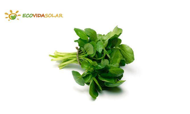 Berro (Rorippa nasturtium-aquaticum) - Propiedades