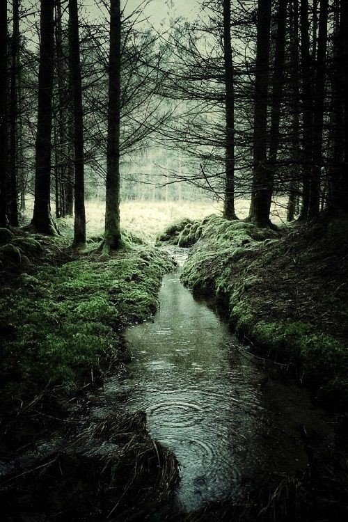 through the woods, in rain or sprinkling lightly..  the fragrance of the woodland plants, moss, and ferns..  cool and moist air, intricate patterns of the forest all around me.