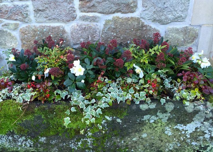 Image via The Frustrated Gardener
